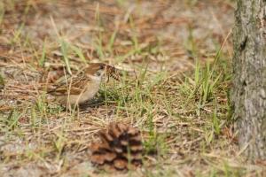 sparrow got a bee